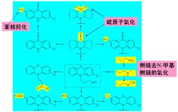 其中第2个c原子的立体结构特征最为重要