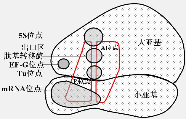 png文件结构