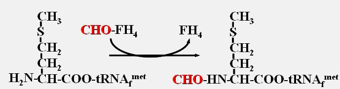 肽键的三种结构式图