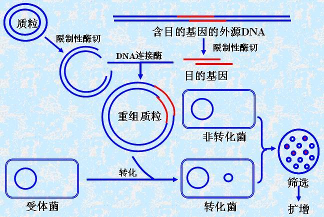 c 获取文件目录结构