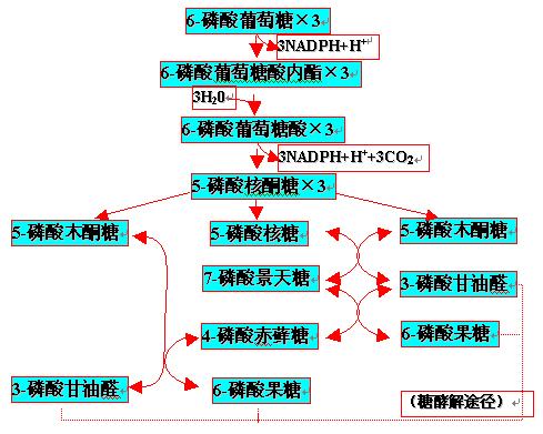 糖酵解关键步骤